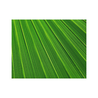 Hoja de palma verde abstracta colorida lona envuelta para galerias