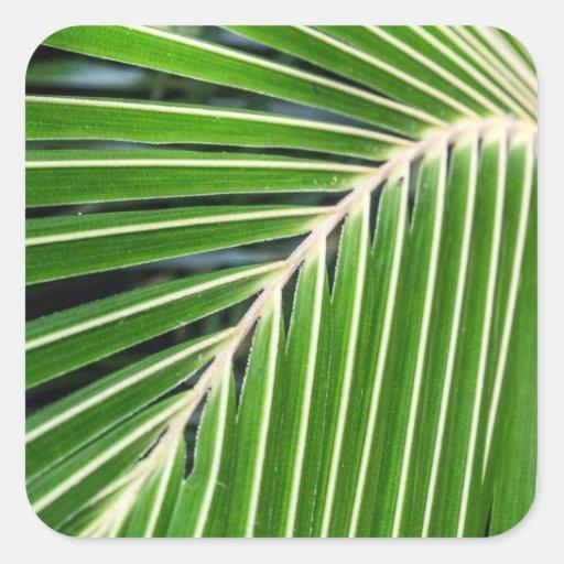 Hoja de palma verde abstracta pegatinas cuadradas