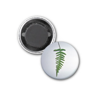 Hoja de palma verde clara aislada en el backgroun  iman de nevera