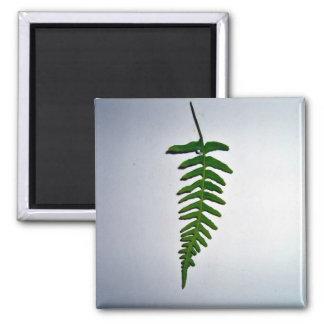 Hoja de palma verde clara aislada en el backgroun  imán para frigorifico