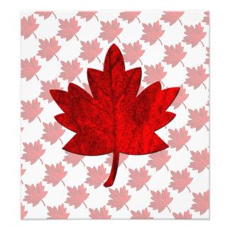 Hoja del Canadá-Arce Fotografía