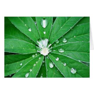 Hoja del Lupine en la lluvia Tarjeta De Felicitación