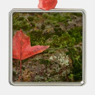 hoja del otoño adorno cuadrado plateado