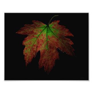 Hoja del otoño fotografías