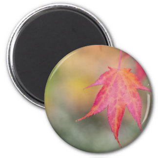 Hoja del otoño imán redondo 5 cm