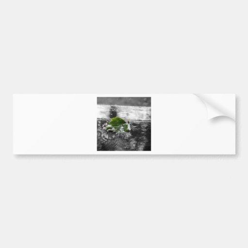 Hoja en agua pegatina de parachoque
