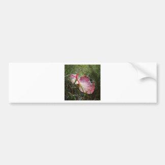 Hoja escarchada etiqueta de parachoque