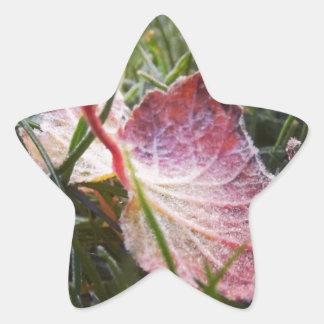 Hoja escarchada pegatina en forma de estrella