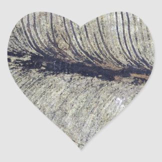 Hoja fósil frágil de la planta pegatina en forma de corazón