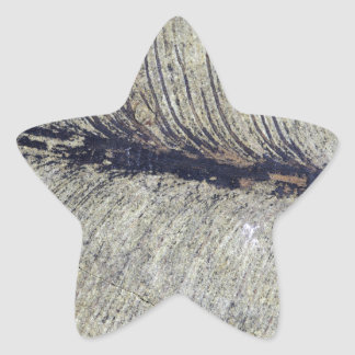 Hoja fósil frágil de la planta pegatina en forma de estrella