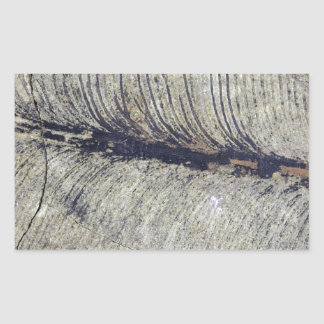 Hoja fósil frágil de la planta pegatina rectangular