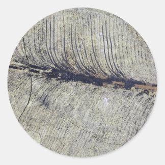 Hoja fósil frágil de la planta pegatina redonda