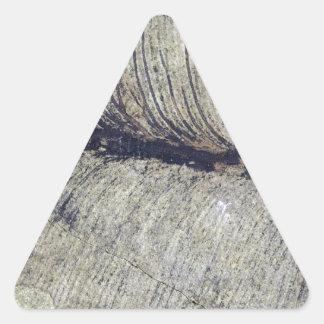 Hoja fósil frágil de la planta pegatina triangular