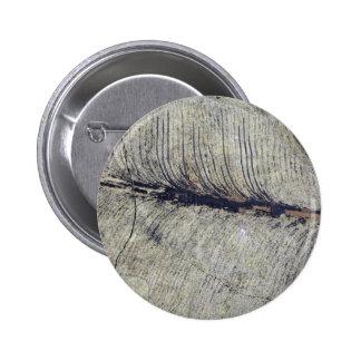 Hoja fósil frágil de la planta pin redondo 5 cm