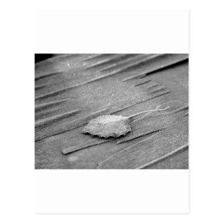 Hoja helada en la madera postal
