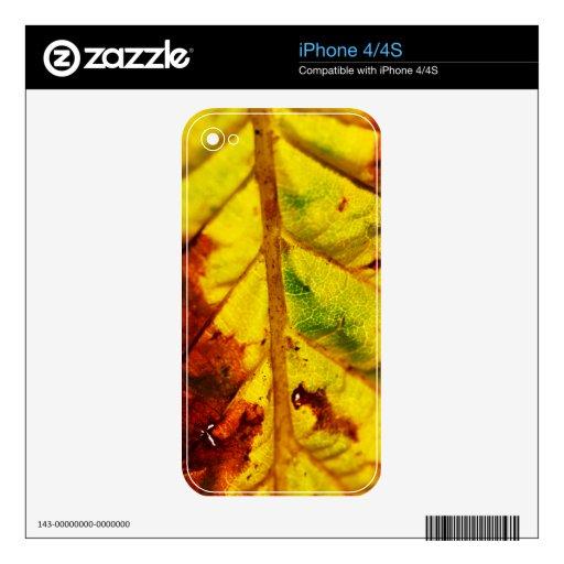 Hoja macra del otoño iPhone 4S calcomanía