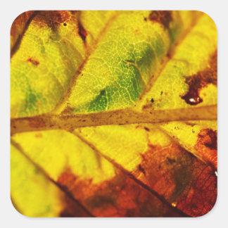 Hoja macra del otoño colcomania cuadrada
