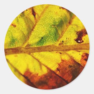 Hoja macra del otoño pegatinas redondas