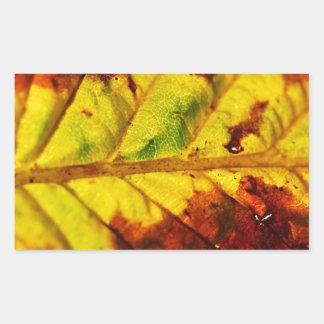 Hoja macra del otoño pegatina rectangular