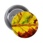 Hoja macra del otoño pins