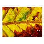 Hoja macra del otoño postales