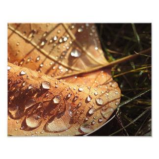 Hoja mojada del otoño - foto fotografía