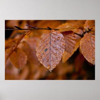 Hoja mojada del otoño poster