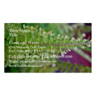 Hoja rizada hermosa del helecho plantillas de tarjetas de visita