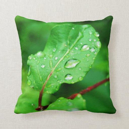 Hoja verde clara después de la almohada de la lluv