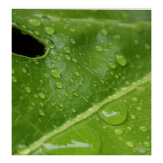 Hoja verde con el poster/la impresión de las gotas