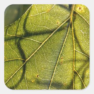 hoja verde con los tendrils del musgo español en pegatina cuadrada