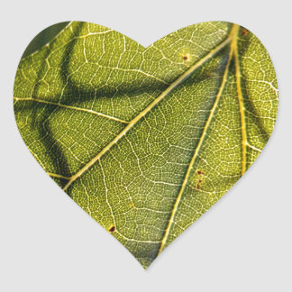 hoja verde con los tendrils del musgo español en pegatina en forma de corazón