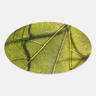 hoja verde con los tendrils del musgo español en pegatina ovalada