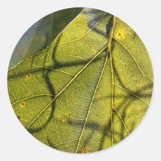 hoja verde con los tendrils del musgo español en pegatina redonda