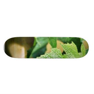 Hoja verde de la uva tablas de patinar
