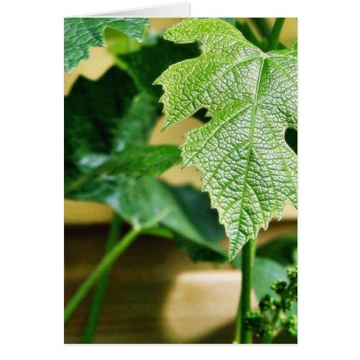 Hoja verde de la uva tarjeta de felicitación