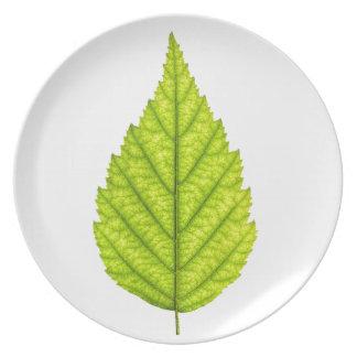 Hoja verde del árbol platos para fiestas
