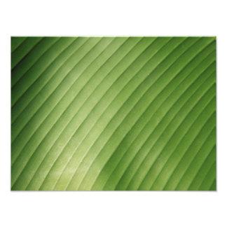 Hoja verde del plátano arte fotográfico