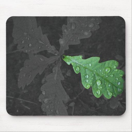 Hoja verde del roble en lluvia alfombrillas de ratones
