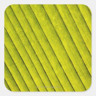 Hoja verde en un jardín botánico 3 pegatina cuadradas personalizadas