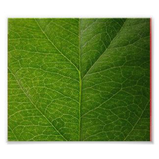 Hoja verde fotografía