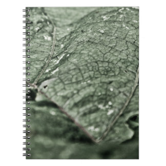 Hoja verde gastada libro de apuntes con espiral