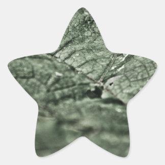 Hoja verde gastada pegatina en forma de estrella