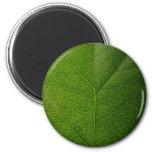 Hoja verde imán de frigorífico