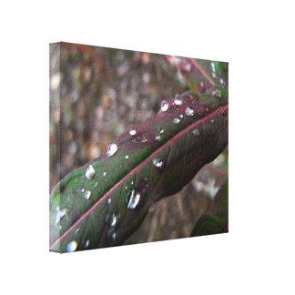 Hoja verde oscuro del Fireweed con las gotitas de  Impresión De Lienzo