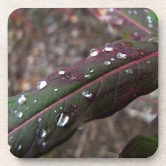 Hoja verde oscuro del Fireweed con las gotitas de Posavasos De Bebida