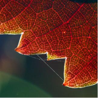 Hoja y Web de la uva de la caída Fotoescultura Vertical