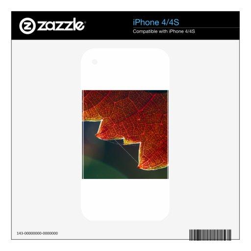 Hoja y Web de la uva de la caída Calcomanías Para iPhone 4S