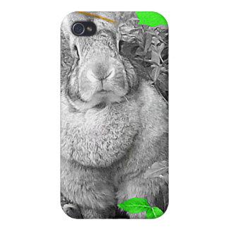 Hojas blancos y negros del verde del conejo gigant iPhone 4 protectores