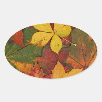 Hojas brillantemente coloreadas de la caída pegatina ovalada